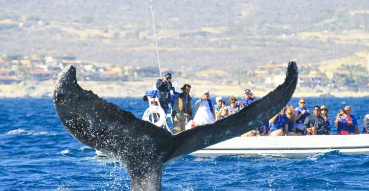 Cabo 2-Hour Whale Watching Adventure