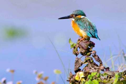 Kathmandu: 3-Day Chitwan Safari Tour