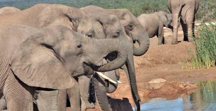 Addo National Park: een volledige dag safaritocht