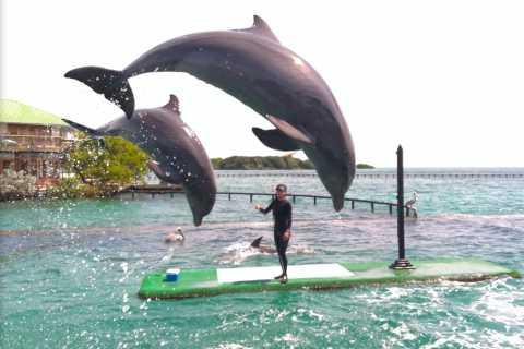 Carthagène: billets pour l'Océanarium avec exposition Dolphin & Shark