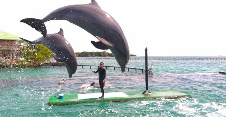 Cartagena: Oceanarium Tickets w/ Dolphin & Shark Exhibition