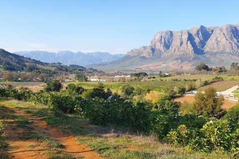 Stellenbosch: Guided Vineyard Hike and Wine Tasting