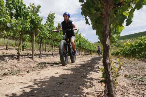 From Cape Town: Half-Day Winelands E-Bike Tour