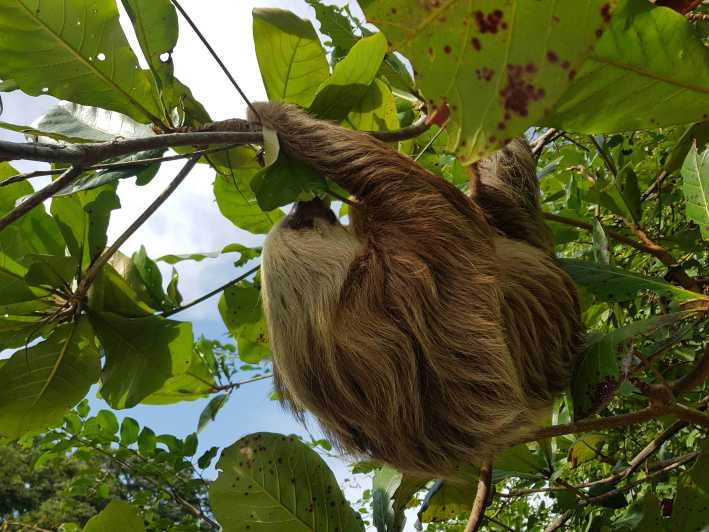 Puerto Limon City Highlights And Cahuita National Park Tour Puerto Limon Costa Rica Getyourguide