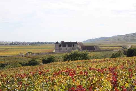 From Beaune: Burgundy 10 Wines Grand Cru Tasting Day Trip