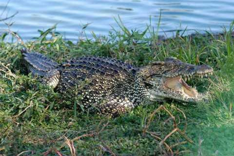 Tour to the Caribbean and Crocodile Farm from Varadero