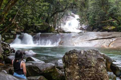 Cairns: Wooroonooran Rain Forest Full-Day Safari