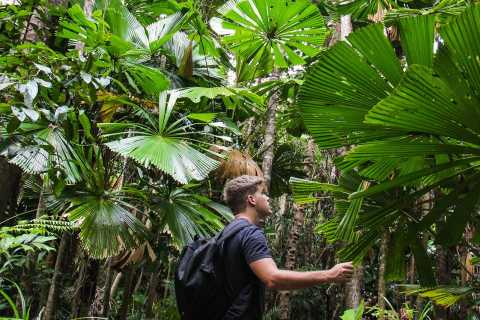 Daintree Wilderness & Cape Tribulation Full-Day Tour