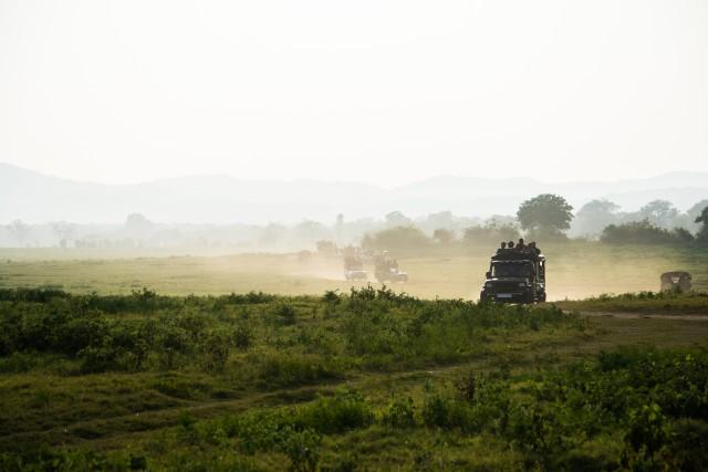 Van Ella: shuttle naar Mirissa / Galle met Udawalawe Safari