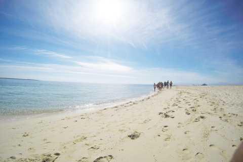 Magawish e isole del Giftun: snorkeling di 1 giorno