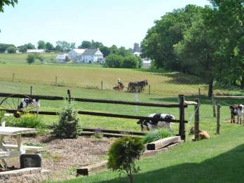 Lancaster: Amish Experience Besichtigung einer persönlichen Tour durch 3 Farmen