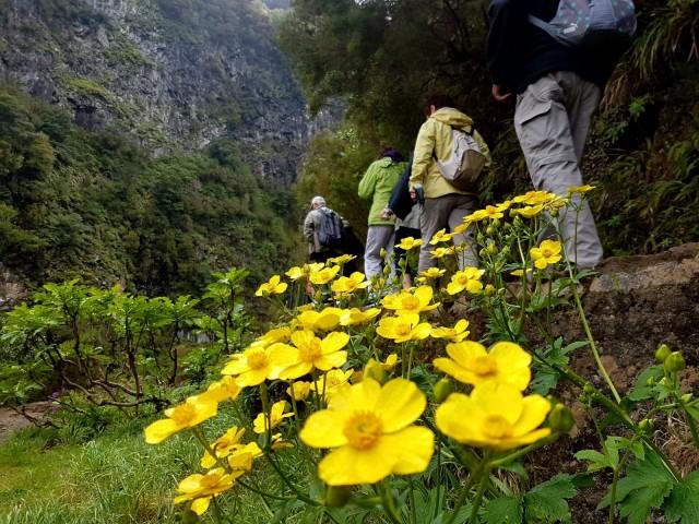 Madeira: Full-Day Rabaçal Valley Levada Walk