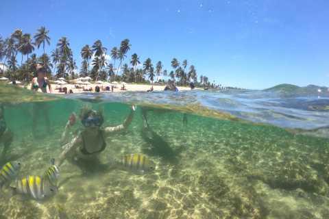 From Salvador: Praia do Forte, Guarajuba, and Project Tamar