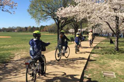 Washington DC: Cherry Blossom Festival Tour by Bike