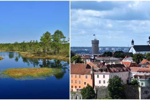 Tallinn: Old Town Tour with Bog Walk