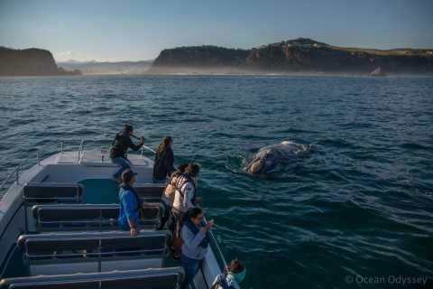 Knysna Close Encounter Whale Watching Tour
