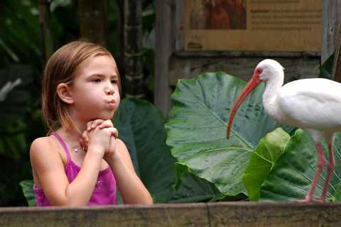 Fort Lauderdale: Flamingo Gardens Entry Ticket