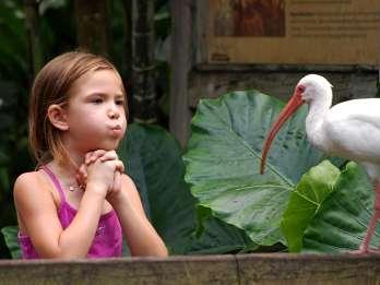 Davie: Flamingo Gardens & Schutzgebiet für Wildtiere