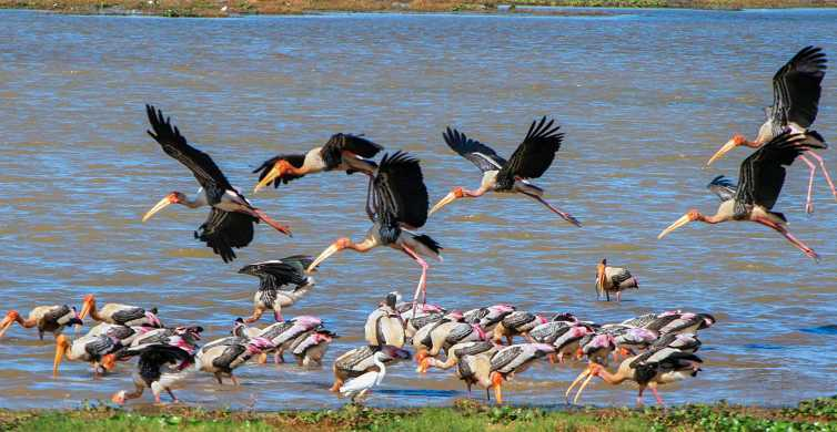 Kumana: Private 3-Hour Kumana National Park Safari
