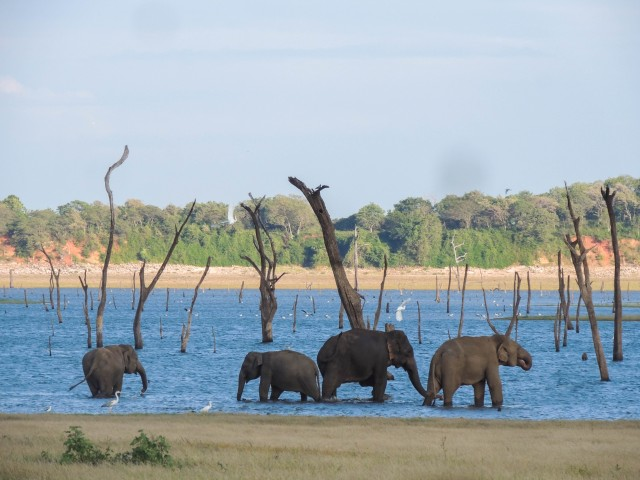 Kaudulla National Park: Private Safari
