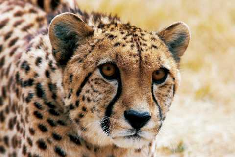Christchurch: Orana Wildlife Park Admission