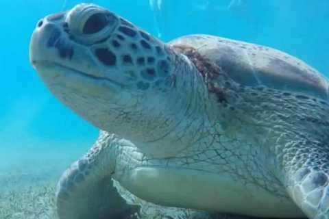 Marsa Alam: Abu Dabbab Snorkeling Tour