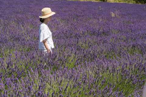 From Marseille: Lavender Fields Half-Day Tour