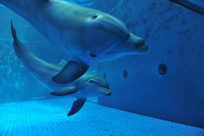 Genua: Aquarium von Genua mit Mittagessen
