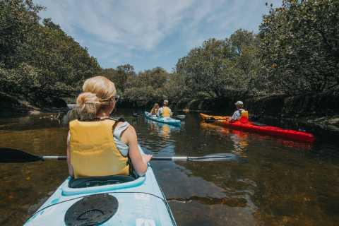 Adelaide: Dolphin Sanctuary Eco Kayaking Tour