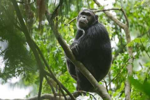 Rwanda: 5-Day Gorilla and Chimpanzee Trekking Tour