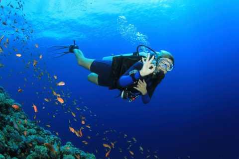 Marsa Alam: Full-Day Diving Tour met lunch en twee duiken