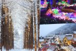 Seoul: Nami Island's Three Highlights Small-Group Tour