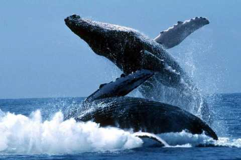 Punta Cana: Whale Whatching Sanctuary Experience