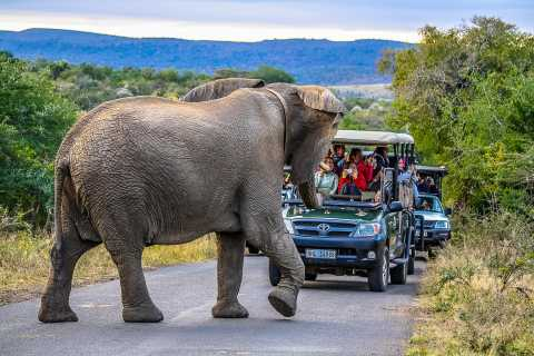 Hluhluwe-Imfolozi: Big 5 Volledige of halve dag safari