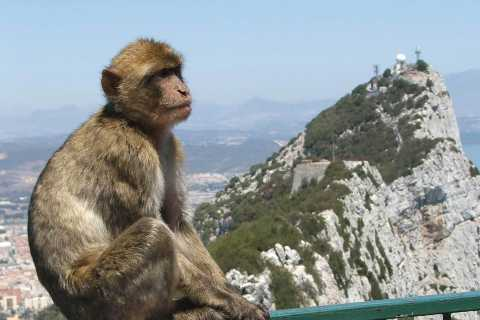 Direct from Malaga: Day Trip to Gibraltar with Guided Tour