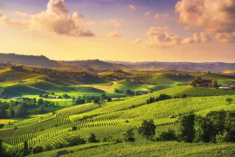 Turin: Langhe Wine Tour with Private Transfers and Lunch