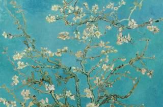 Amsterdam: Van Gogh Tour & Museumseintritt plus eine Attraktion