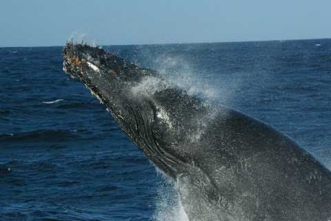 St Lucia: Whale and Dolphin Watching Tour in Richardsbay