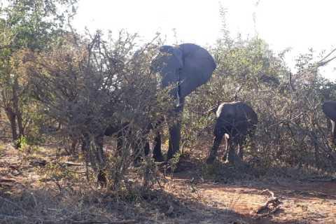 Zambezi National Park: 3-Hour Safari Adventure