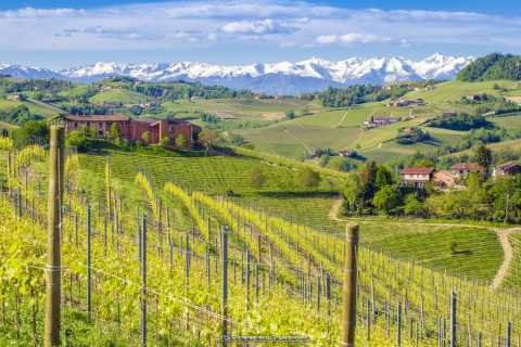 Barbaresco: Guided Hills Hike with Wine Tasting