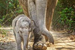Phuket / Khaolak: Meio Dia no Santuário Ético de Elefantes