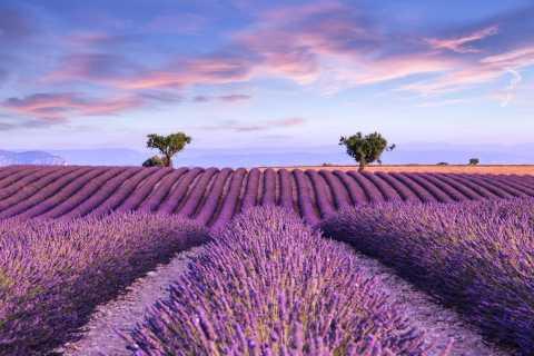 Avignon: Lavender Ocean Day Tour