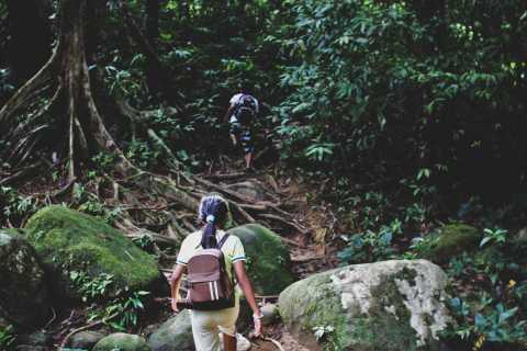 Desde Khao Lak: Khao Sok Jungle Hike and Canoe Tour