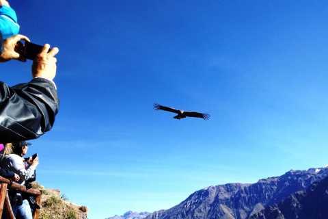 Puno: tour de 2 días al Cañón del Colca a Arequipa