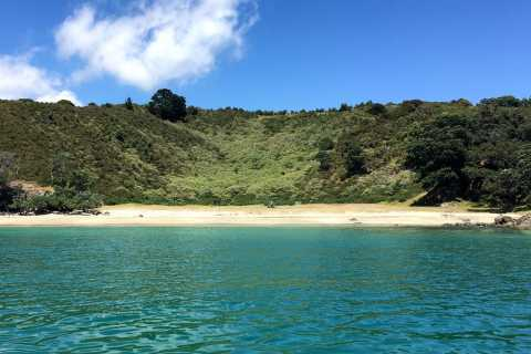 Waiheke Island: Forest and Beach Guided Walk