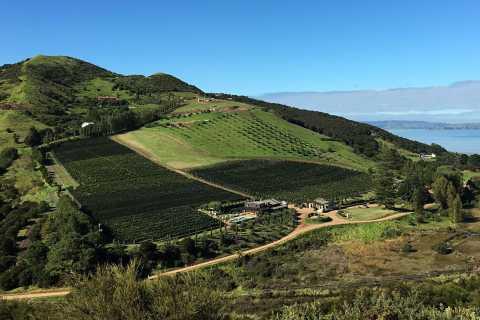 Waiheke Island: Vineyards and Bush Walk