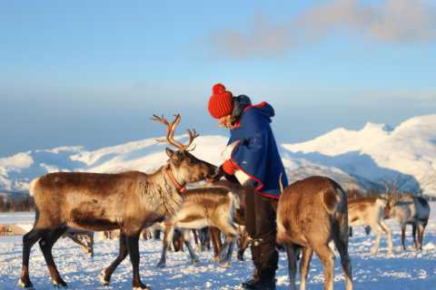 From Tromsø: Reindeer Ranch and Sami Culture Tour
