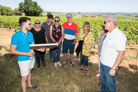 Burgundy: Winery Tour