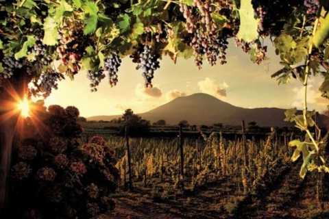 Pompeii: Full-Day Tour with Wine Tasting and Light Lunch