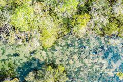 Bonito: Mergulho de Snorkel no rio da Prata